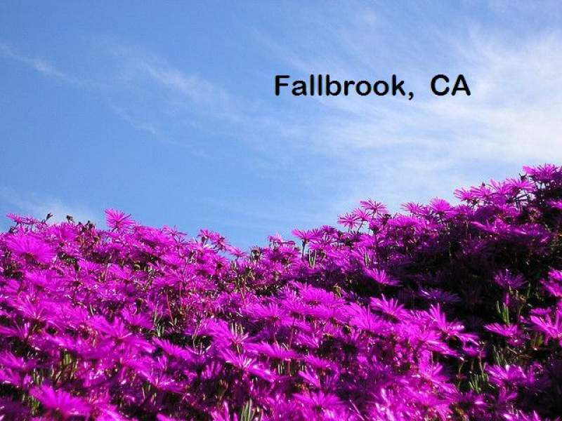 Fallbrook Homes for sale